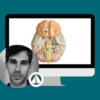 La Osteopatía y el Sistema Neurovegetativo