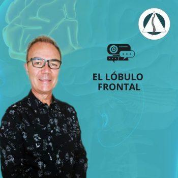 El lóbulo frontal